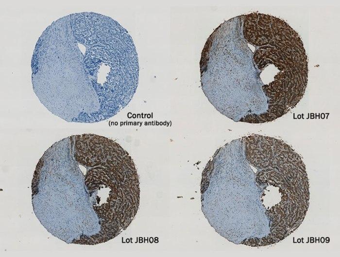 antibody-reproducibility-consistency.jpg